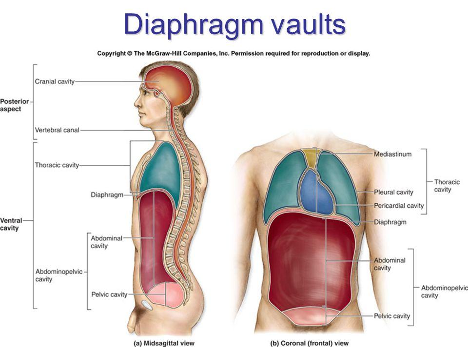 Diaphragm vaults