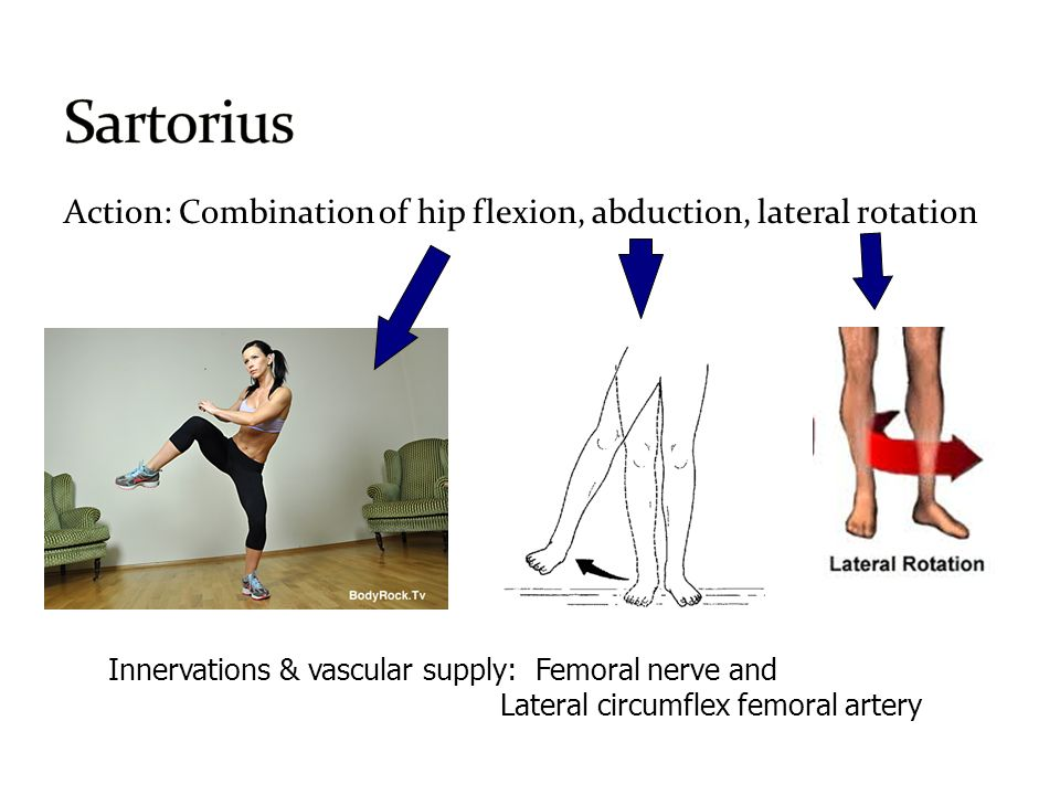 presentation hip joint by: aaron white, ashley garbarino, anna, Muscles