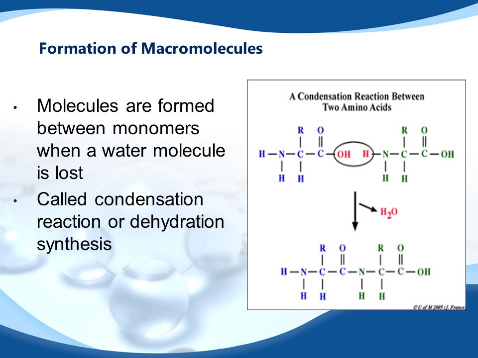 Molecules are formed between monomers when a water molecule is lost