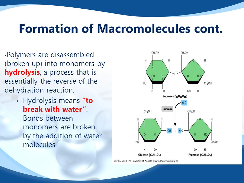 Formation of Macromolecules cont.