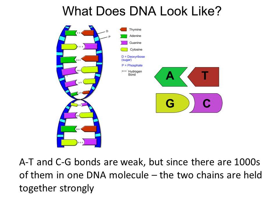 genetic information dna rna to protein ppt video online download. Black Bedroom Furniture Sets. Home Design Ideas