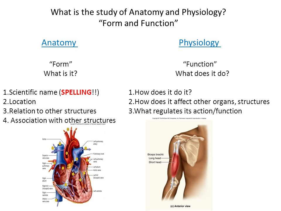 Fein Why Do We Study Anatomy And Physiology Together Fotos ...