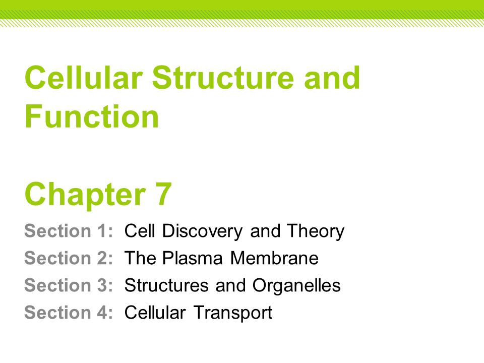 Cellular Structure And Function Chapter 7 Ppt Video Online Download