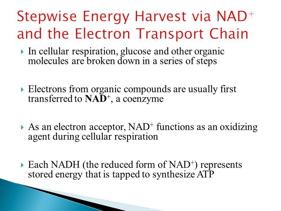 Cellular Respiration: Harvesting Chemical Energy - ppt video ...