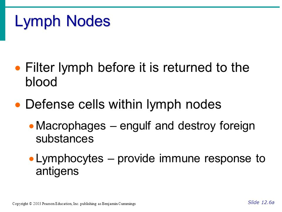 Lymph Nodes Filter lymph before it is returned to the blood