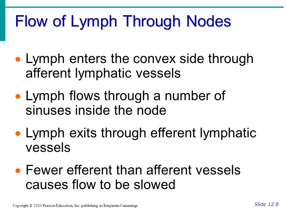 Flow of Lymph Through Nodes