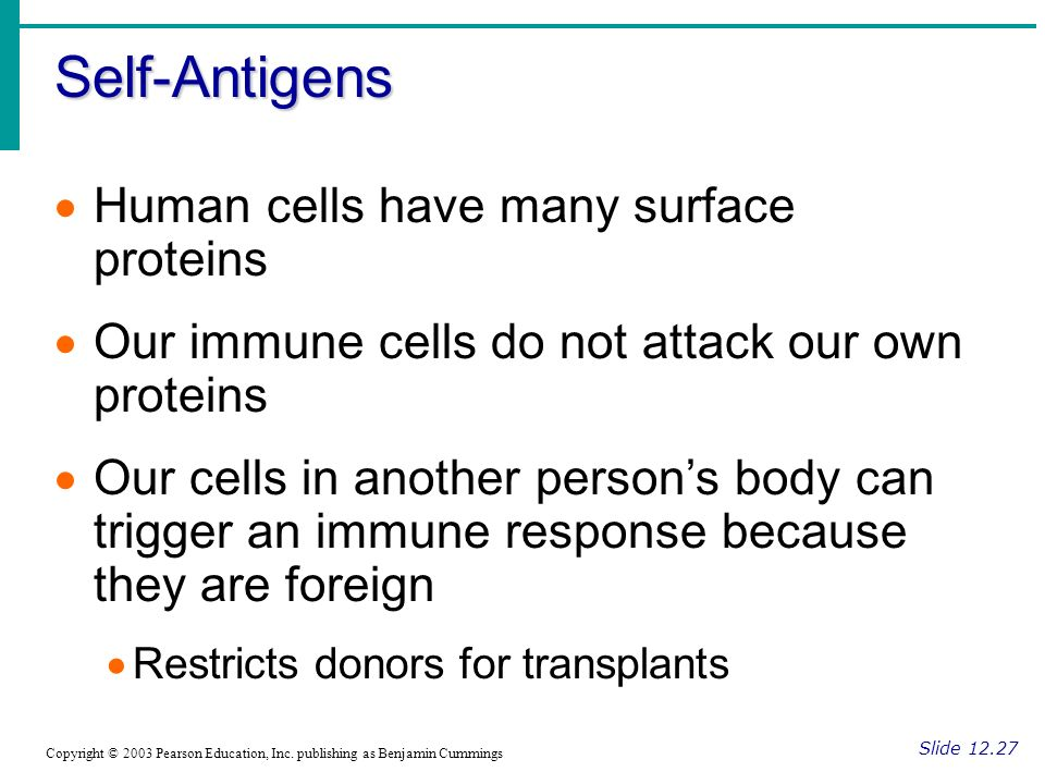 Self-Antigens Human cells have many surface proteins