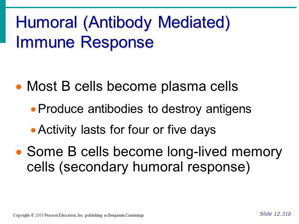 Humoral (Antibody Mediated) Immune Response