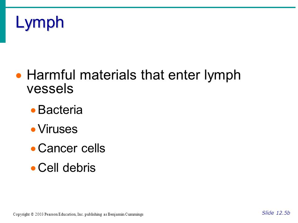 Lymph Harmful materials that enter lymph vessels Bacteria Viruses