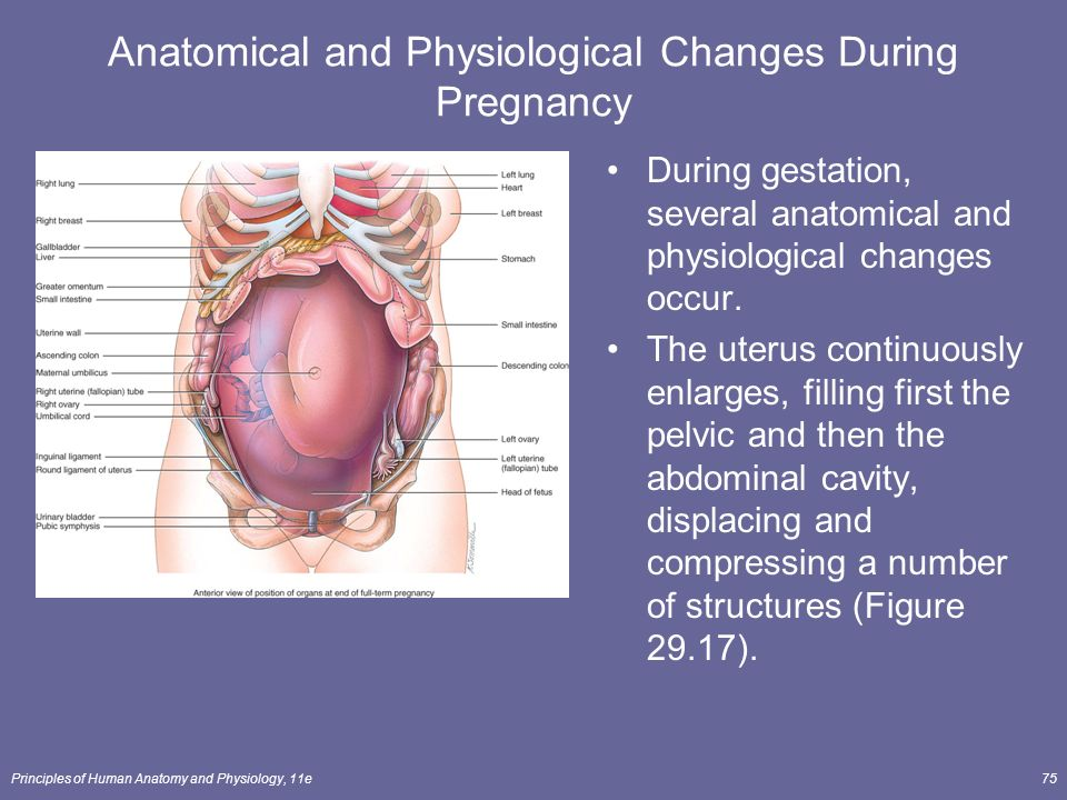 Anatomy test in pregnancy 9166518 - follow4more.info
