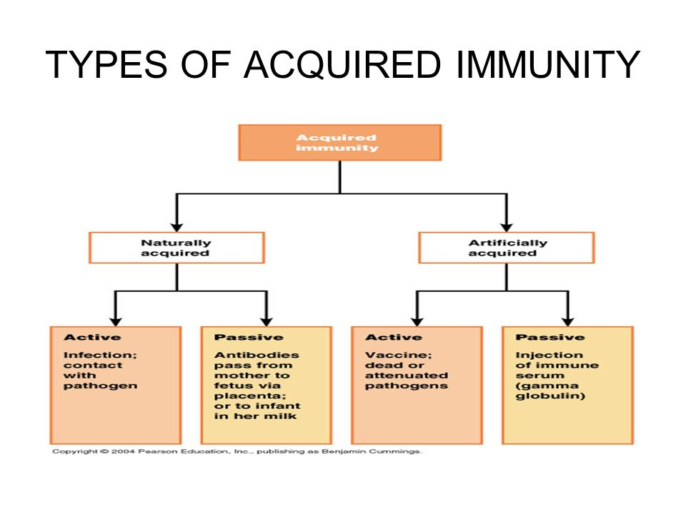 innate and adaptive immunity pdf