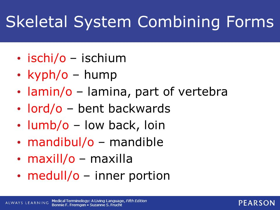 4 Musculoskeletal System. - ppt download