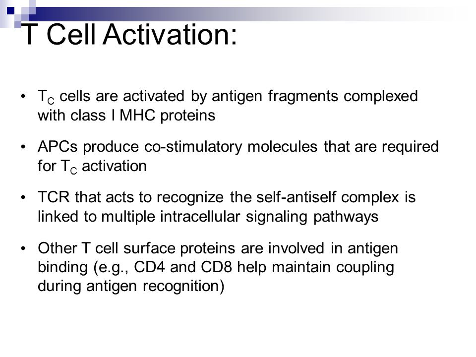 T Cell Activation: TC cells are activated by antigen fragments complexed with class I MHC proteins.