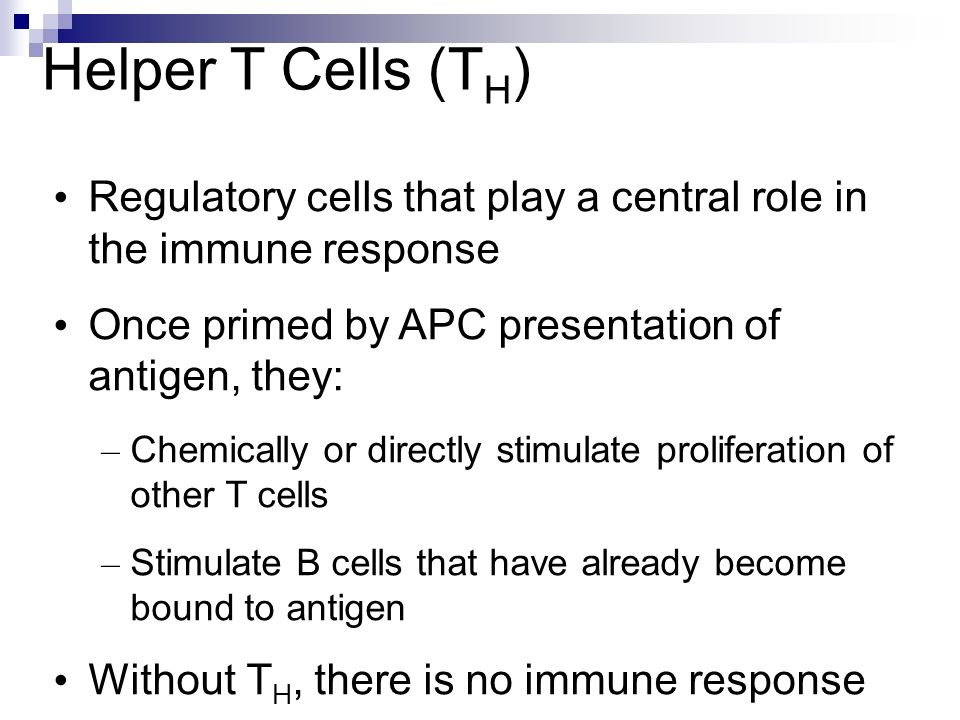 Helper T Cells (TH) Regulatory cells that play a central role in the immune response. Once primed by APC presentation of antigen, they: