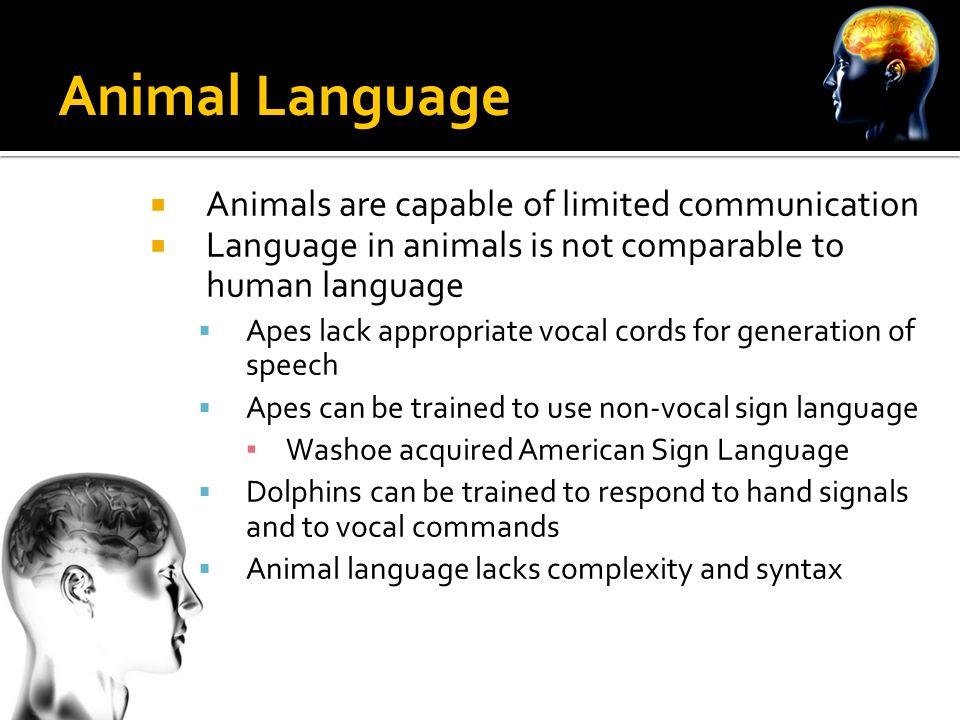 language human communication