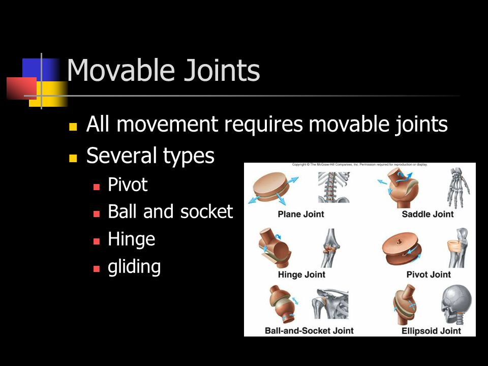 Movable Joints All movement requires movable joints Several types