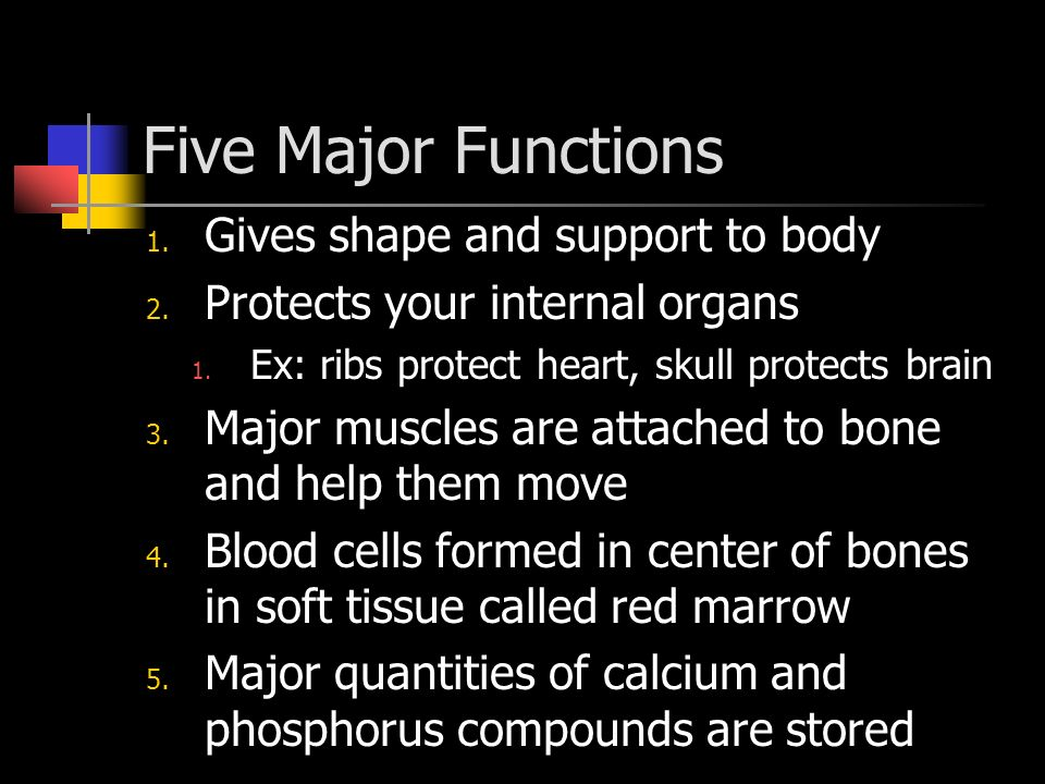 Five Major Functions Gives shape and support to body