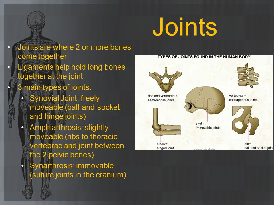 Joints Joints are where 2 or more bones come together