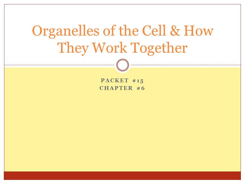 how organelles work together to make Summarize the structure and function of organelles in eukaryotic cells (including:  the  explain ways that these organelles interact with each other to perform the.