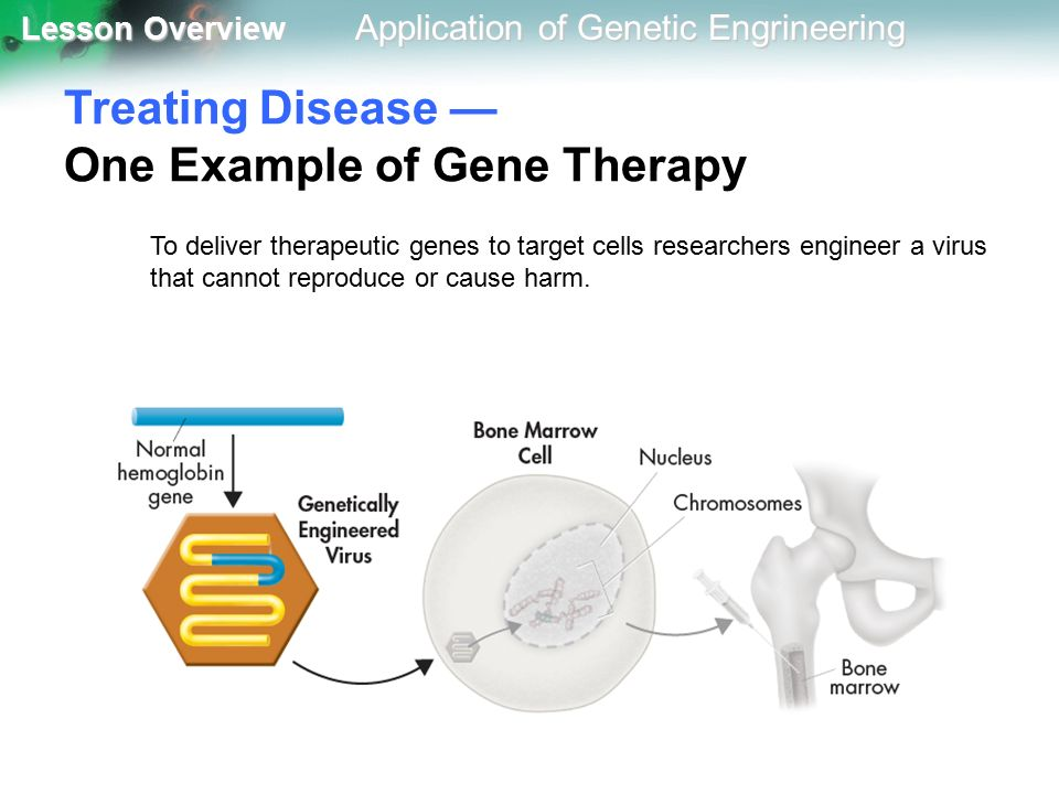 applications of genetic engineering To develop genetic engineering safely and responsibly  biotechnology is the application of a technological process  152 recombinant dna.