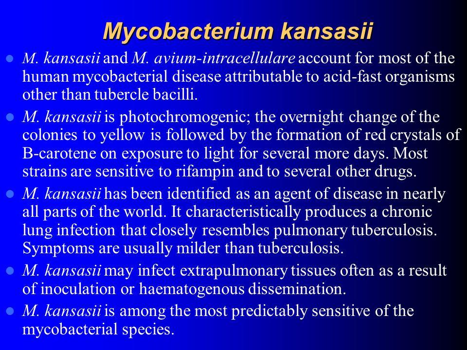 Mycobacterium kansasii
