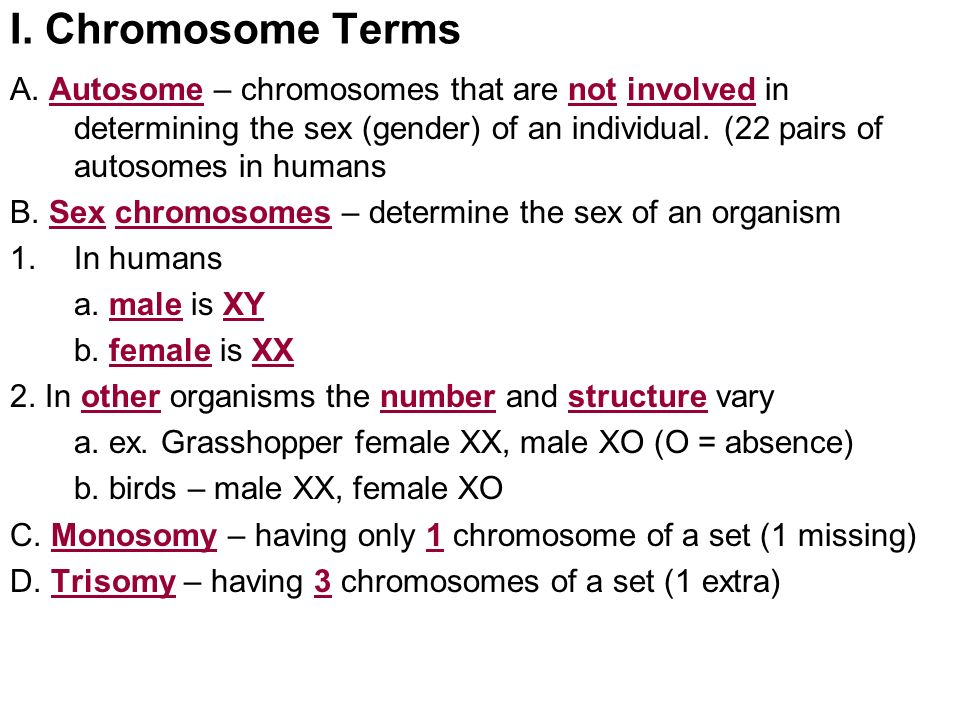 a research of chromosome that determine the sex of an organism First, three botanists independently rediscovered mendel's research after  in  humans and other organisms inheritance of other sex-linked genes role  not  only do sex chromosomes determine the sex of an individual, but.