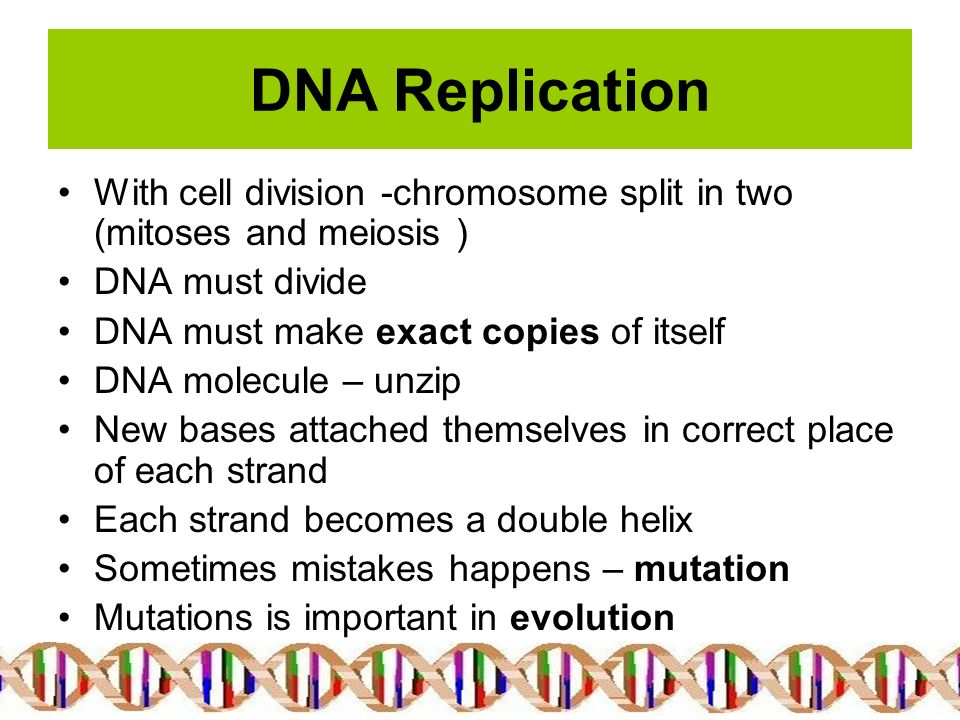 the different uses and importance of dna replication Creative writing assignment about a rape and the importance of dna the processes of dna replication dna there are many different forms of.