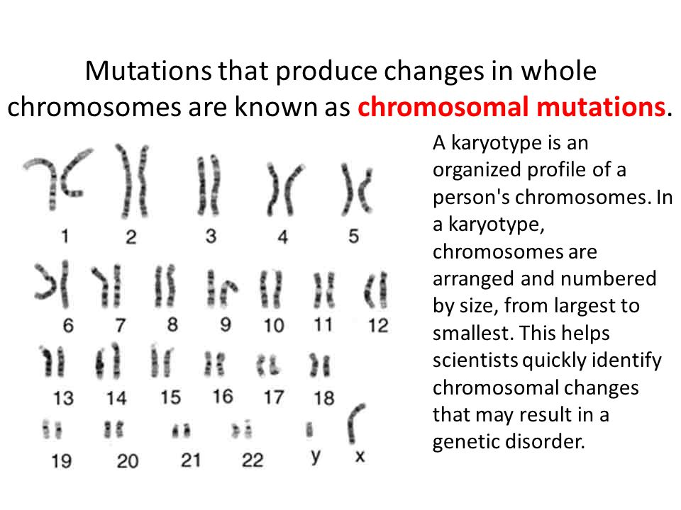 Mutations that produce changes in whole chromosomes are known as chromosomal mutations.