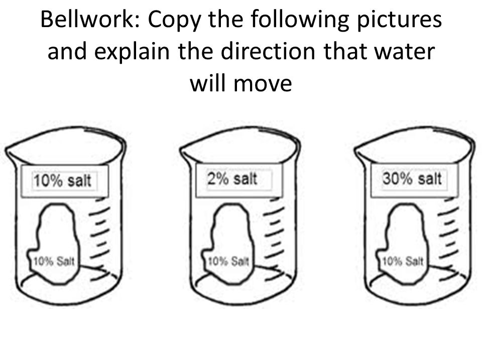 Bellwork: Copy the following pictures and explain the direction that water will move