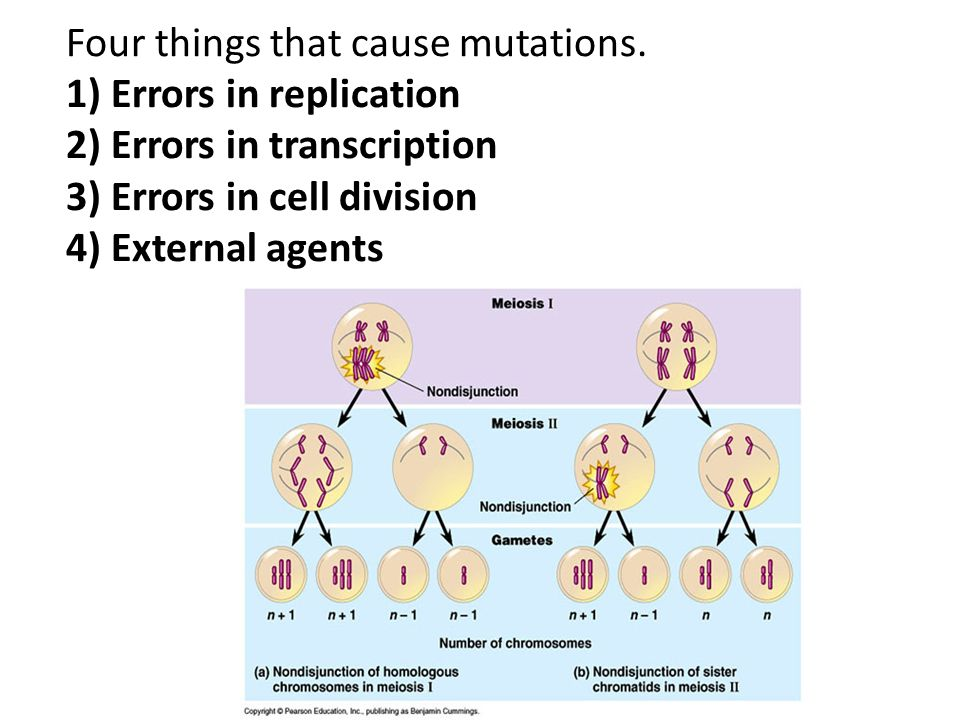 Four things that cause mutations