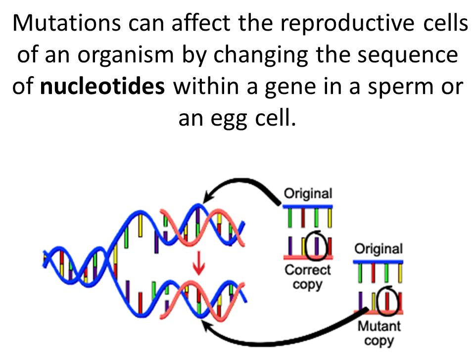 Mutations can affect the reproductive cells of an organism by changing the sequence of nucleotides within a gene in a sperm or an egg cell.