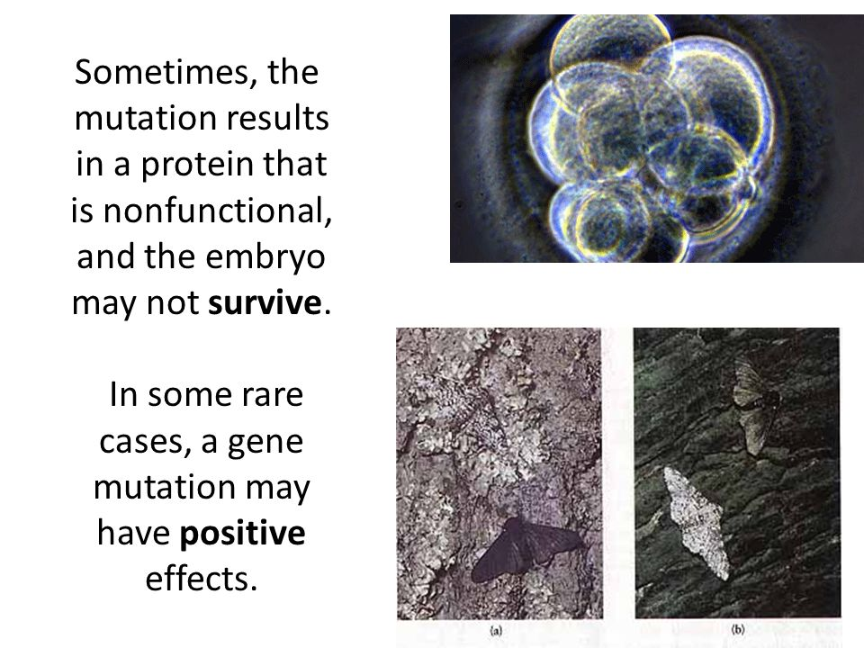 Sometimes, the mutation results in a protein that is nonfunctional, and the embryo may not survive.
