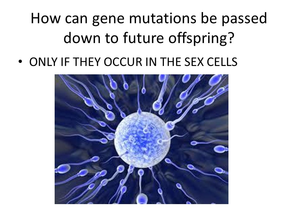 How can gene mutations be passed down to future offspring