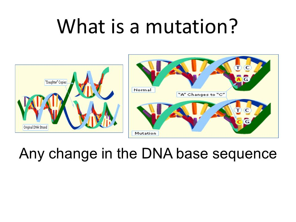 Any change in the DNA base sequence