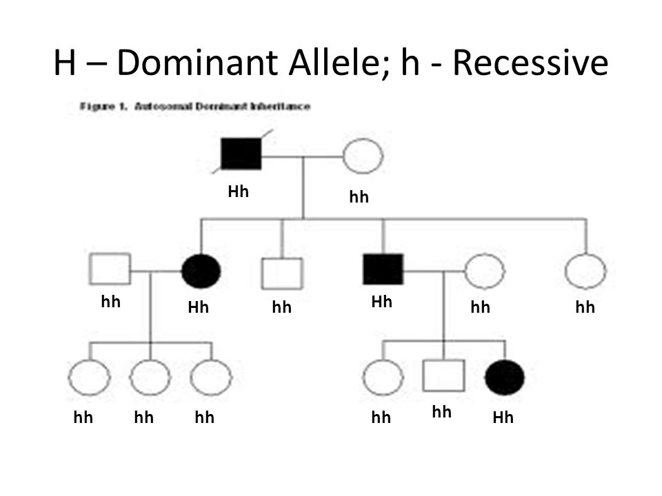 Dominant And Recessive Alleles Chart Mutations. - pp...