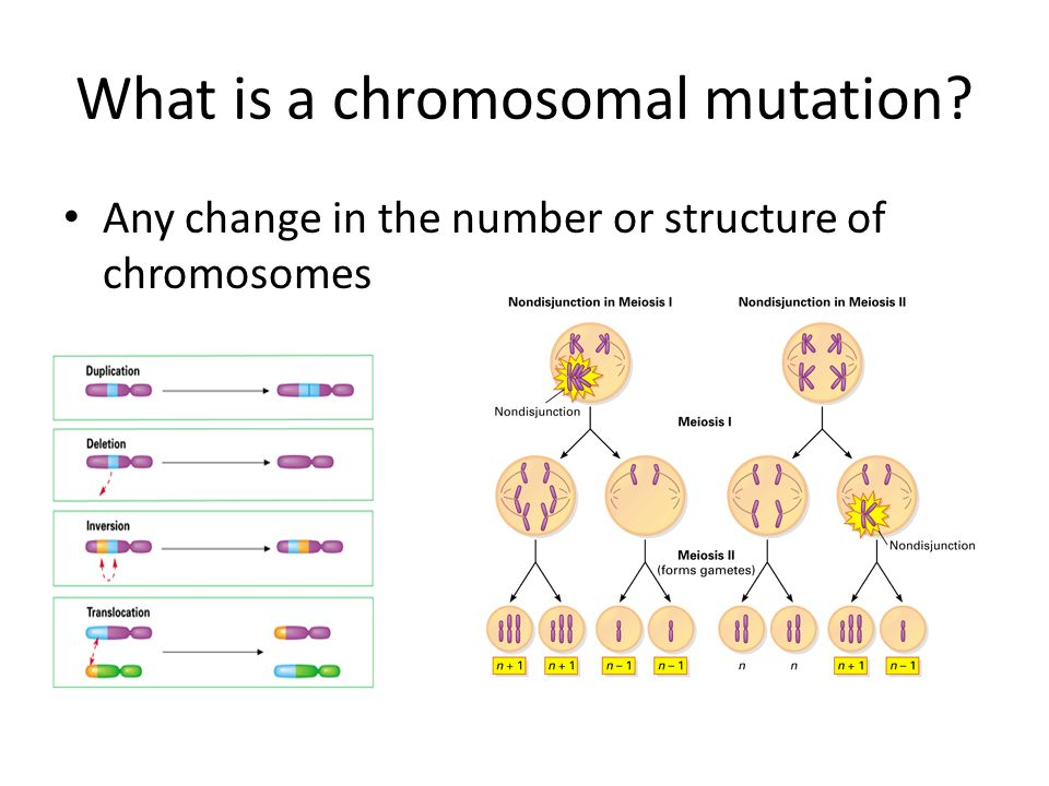 What is a chromosomal mutation