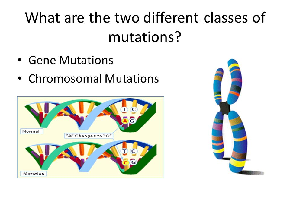 What are the two different classes of mutations