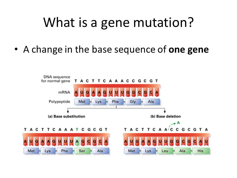 What is a gene mutation A change in the base sequence of one gene
