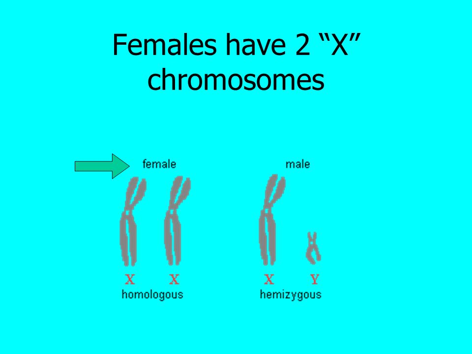 """MEIOSIS """"Biology is the only science in which ..."""