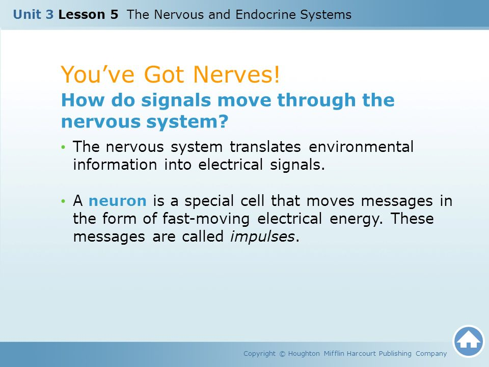 You've Got Nerves! How do signals move through the nervous system