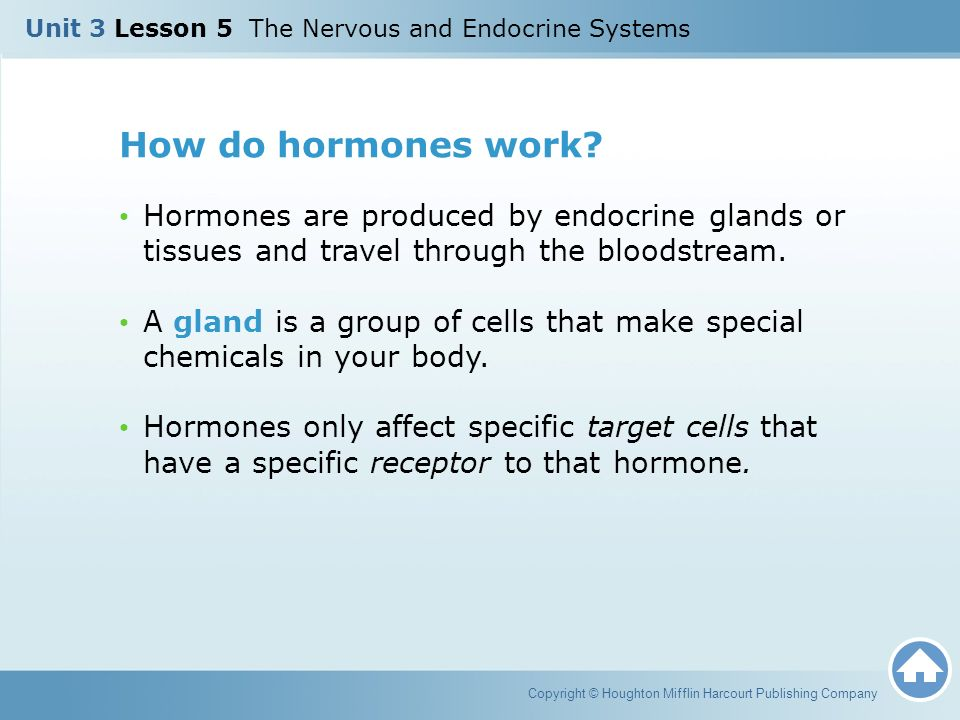 Unit 3 Lesson 5 The Nervous and Endocrine Systems