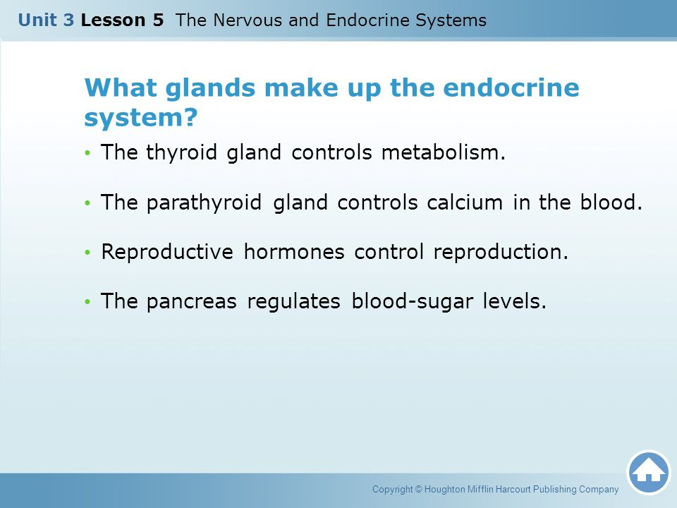 What glands make up the endocrine system