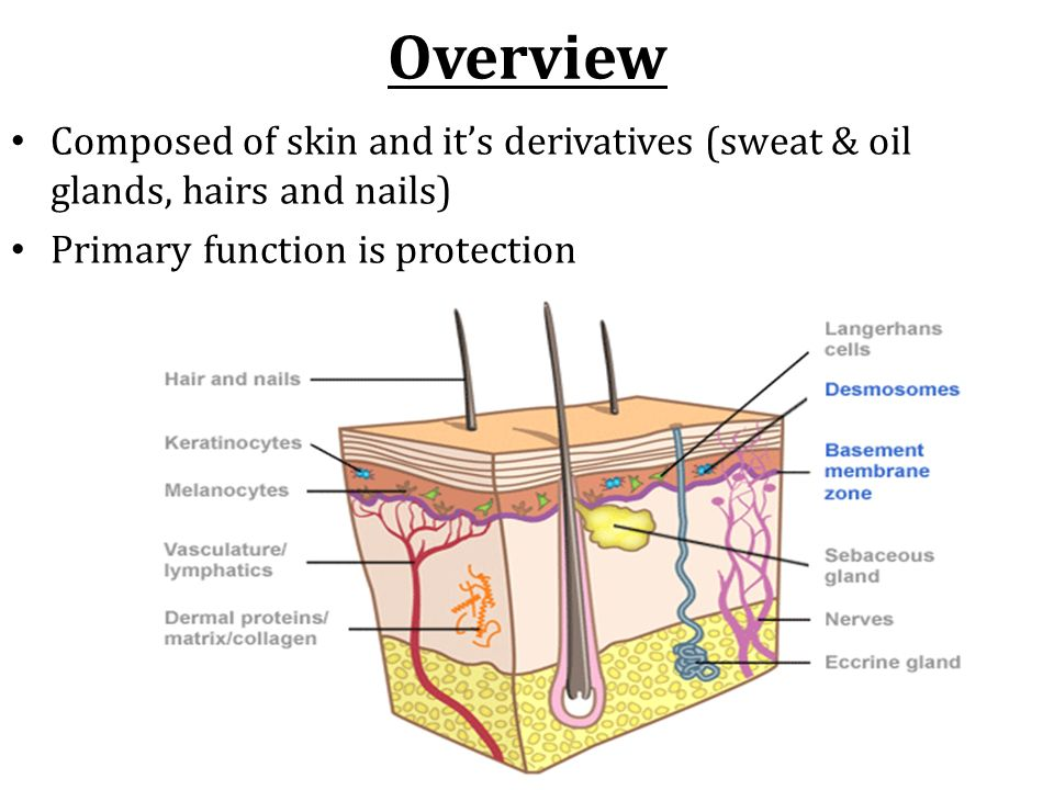 skin and its functions pdf
