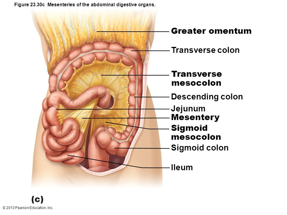 23 The Digestive System. - ppt download