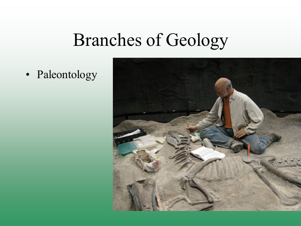 Branches of Geology Paleontology