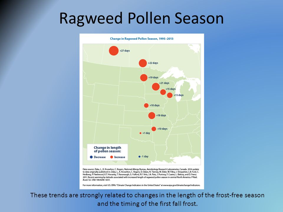 Ragweed Pollen Season These trends are strongly related to changes in the length of the frost-free season and the timing of the first fall frost.