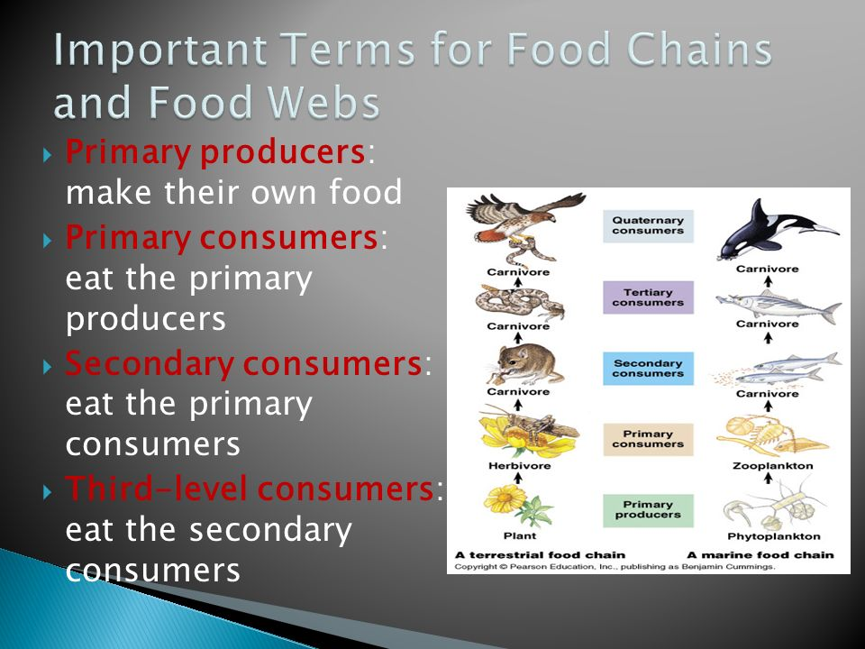 Important Terms for Food Chains and Food Webs