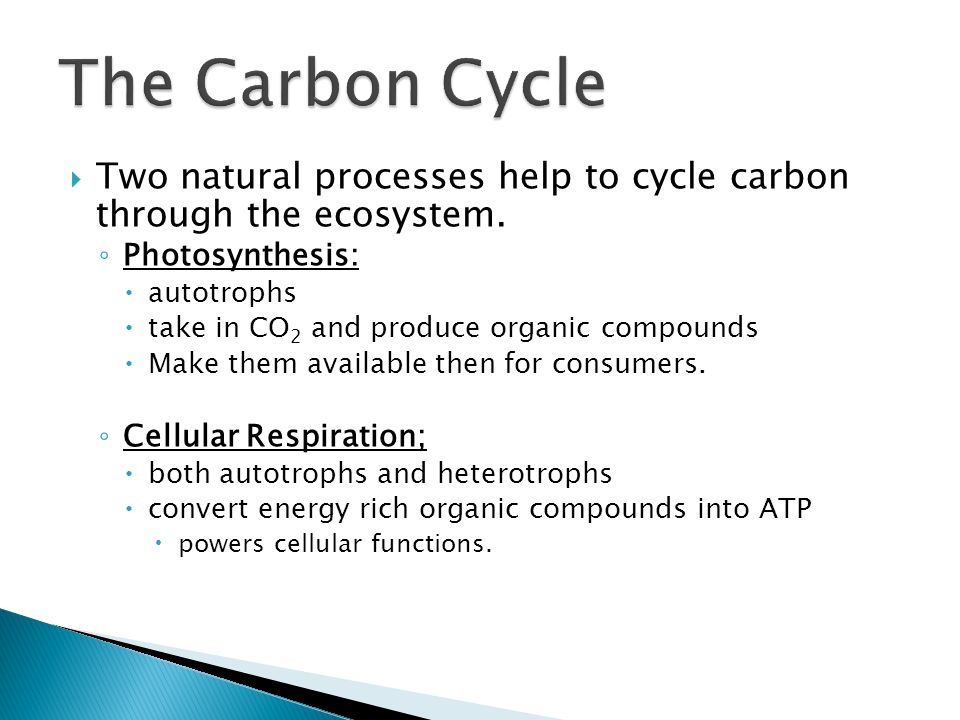 The Carbon Cycle Two natural processes help to cycle carbon through the ecosystem. Photosynthesis:
