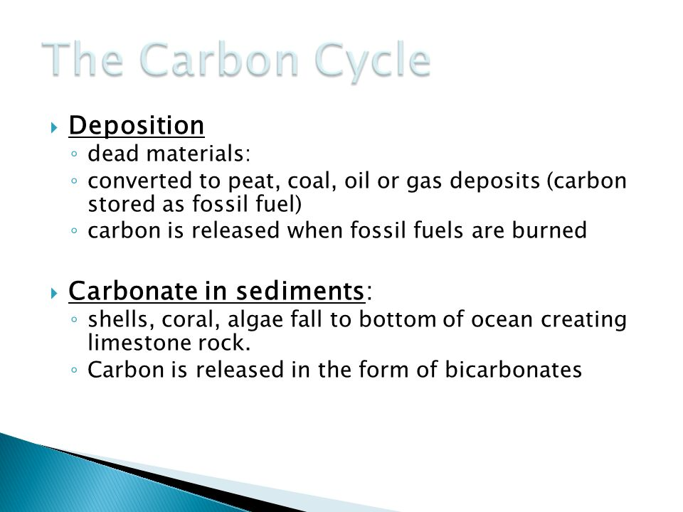 The Carbon Cycle Deposition Carbonate in sediments: dead materials: