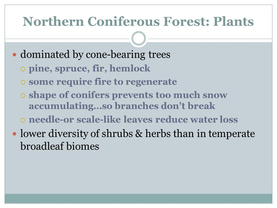 An introduction to the analysis of the coniferous forest